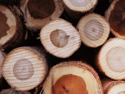オージーは気に障ると木に触ります !? 不思議な習慣、タッチウッドをご紹介。