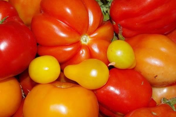 tomato_various_001