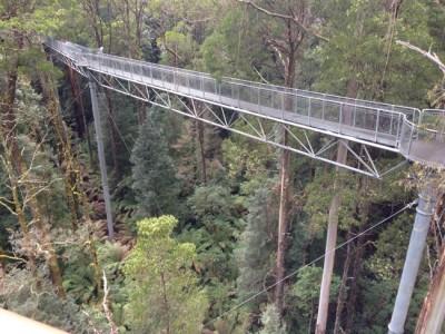 恋に落ちるならこんな観光スポットはいかが?地上30mの空中散歩道 @ Otway Fly Treetop Adventures