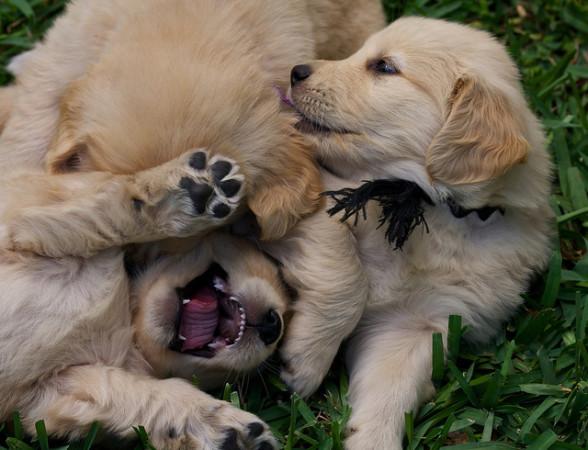puppy_002