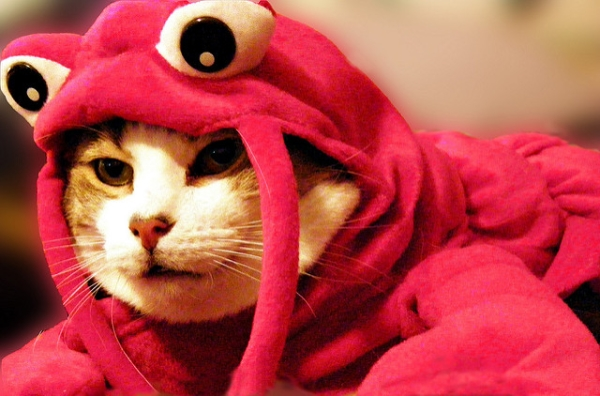 cat_lobster