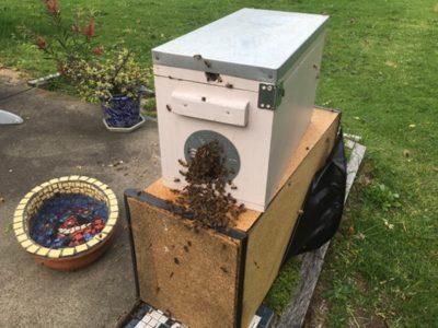 養蜂家の日常風景シリーズ ー 春の慣例行事、野良ミツバチ回収をしたよ