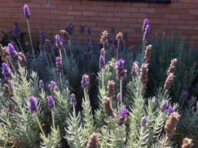 養蜂家はどうやって採るハチミツの量を決めているのか @ 秋のハチミツ採取