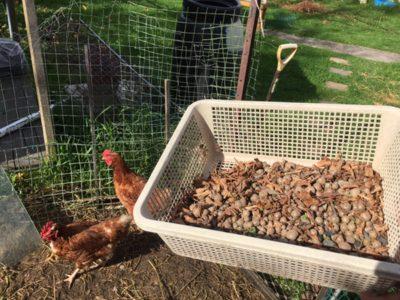 むかごの収穫はこれで楽ちん!掃除機の吸引力を使った「むかご収穫器」を作ったよ