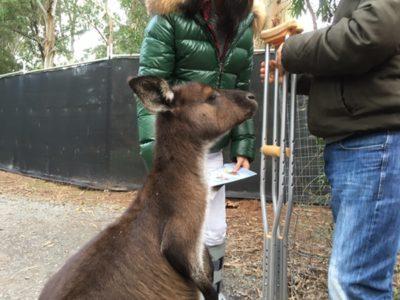 新しくなった自然派動物園、ヒールズビル・サンクチュアリ。その魅力と動物たちに迫ります